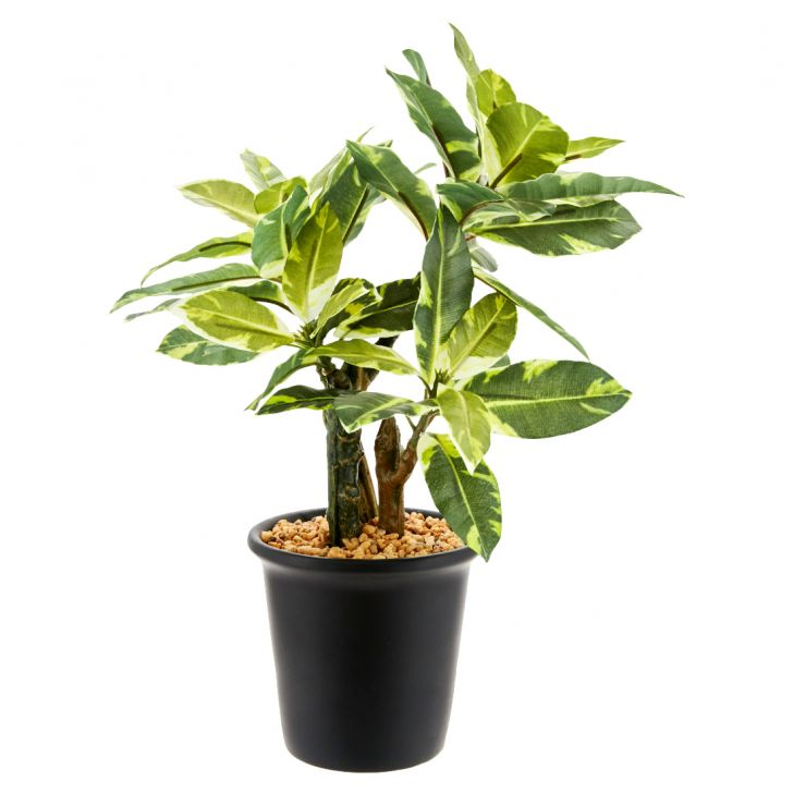 Quercus Plant In Ceramic Pot Ceramic Artificial Plants in Green Multicolor Colour by Living Essence