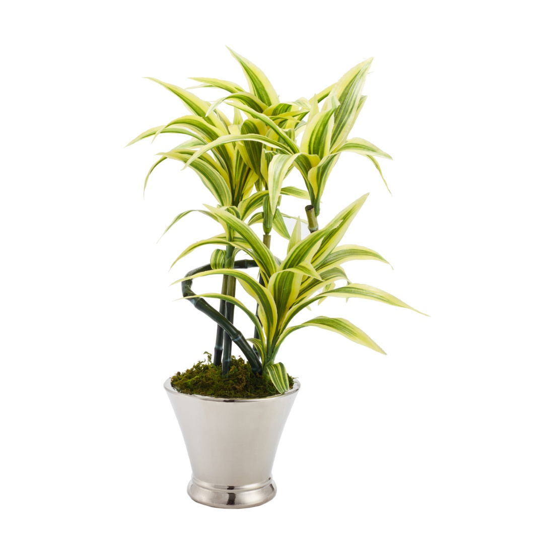 Sage Dracena Large Wax Artificial Plants in Multicolor Colour by Living Essence