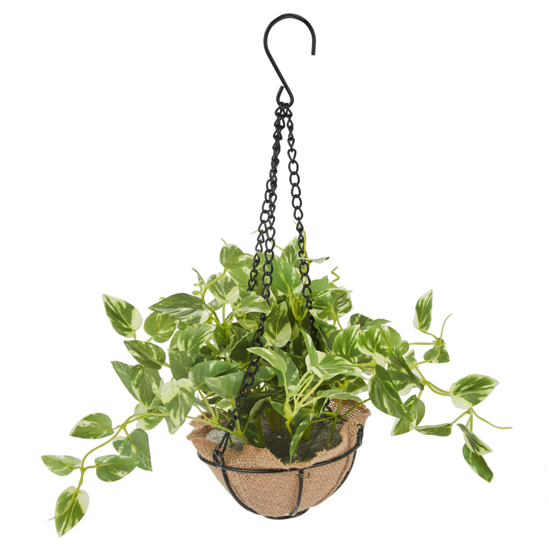 Sage Hanging Pothos Plant 29 Cm Artificial Plants in Green Colour by Living Essence