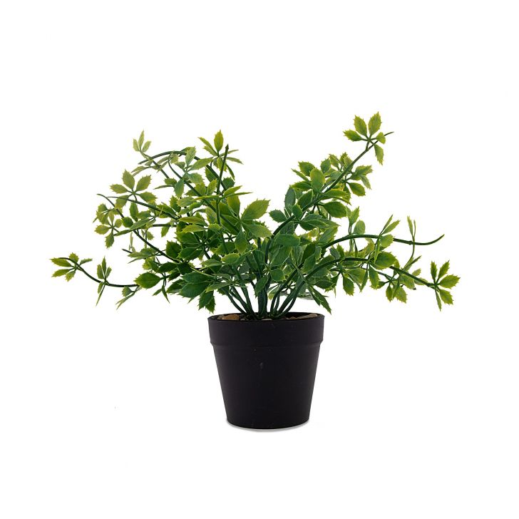 Spread Leaves Pot Plastic Artificial Flowers in Black Colour by HomeTown