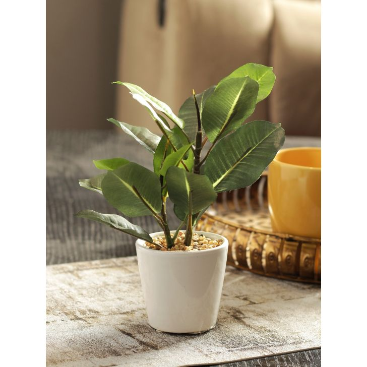 Sage Artificial Plant in Green Colour by HomeTown
