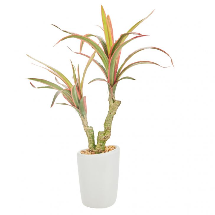 Sage Yucca Plant 28 Cm Artificial Plants in Green Colour by Living Essence