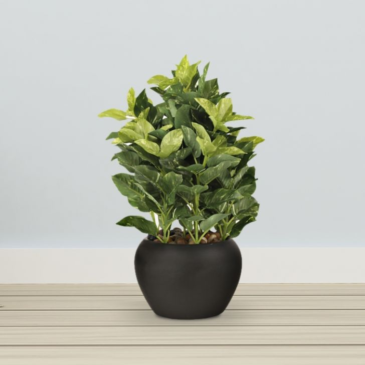Assorted bonsai Plastic and Fabric Artificial Plants in Green Colour by Living Essence