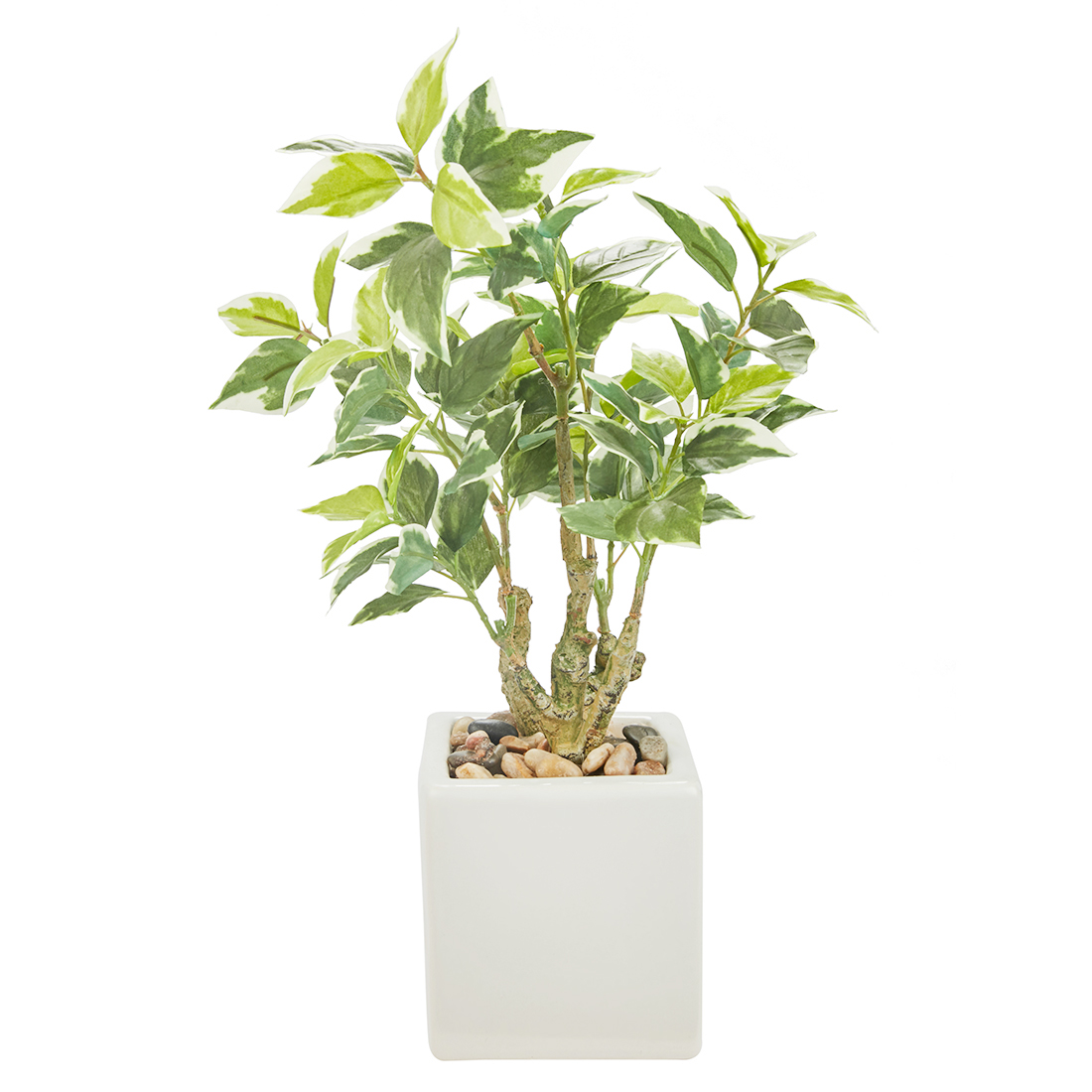 Sage Pepperomia Plant 31 Cm Artificial Plants in Green Colour by Living Essence
