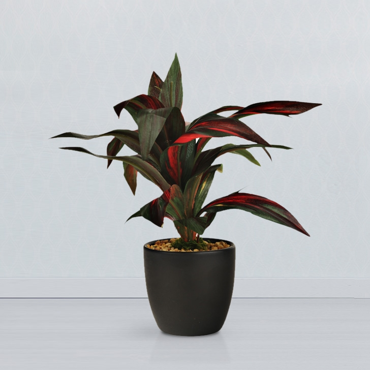Sage Dracaena Bonsai Fabric And Plastic Artificial Plants in Green Colour by Living Essence