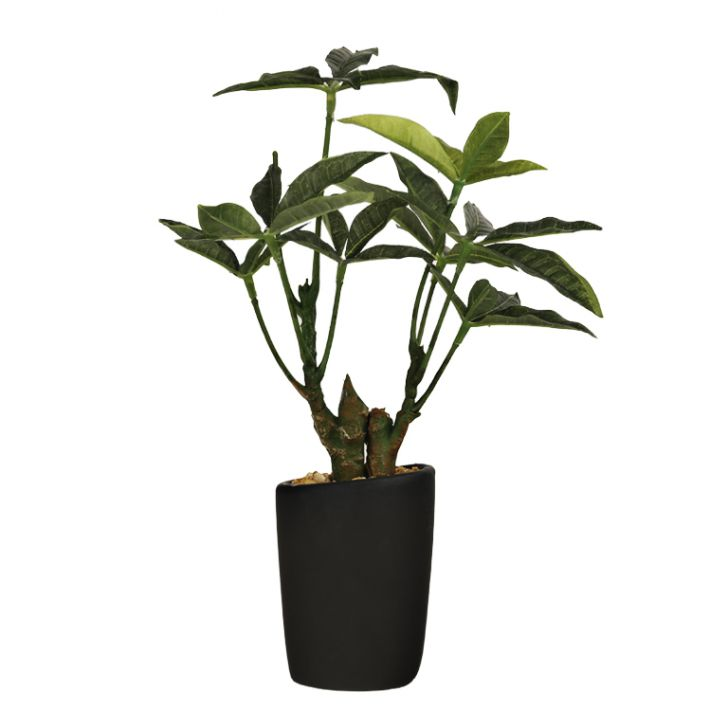 Sage Pachira Bonsai Fabric And Plastic Artificial Plants in Green Colour by Living Essence
