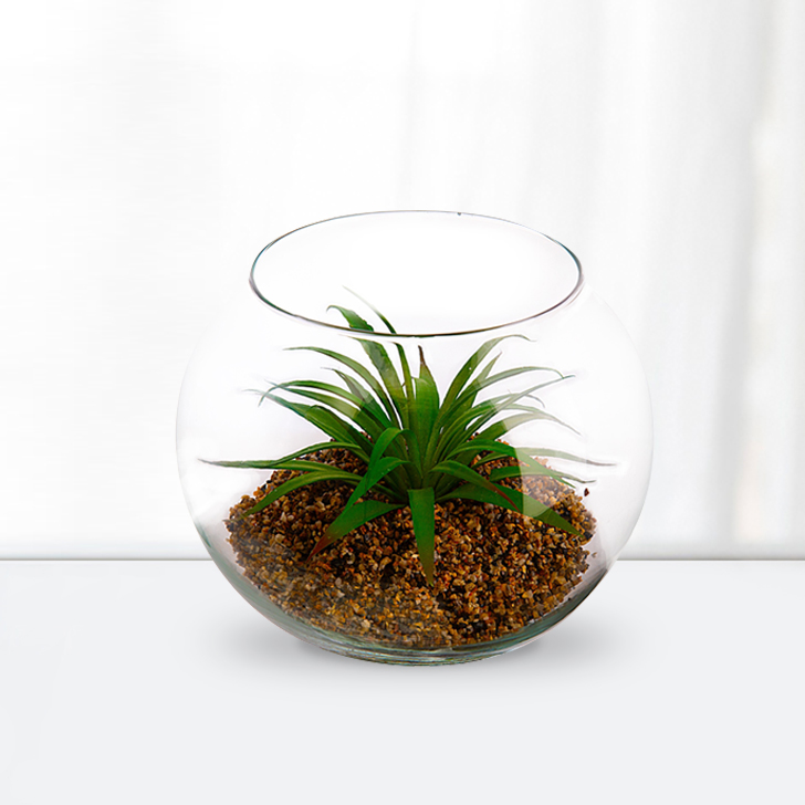 Stark Plant in Bowl Small Glass Serving Bowls in Transperant Colour by Living Essence
