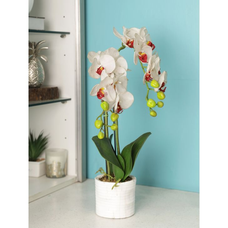 Ivy Polyester Orchid Artificial Flower in White Colour