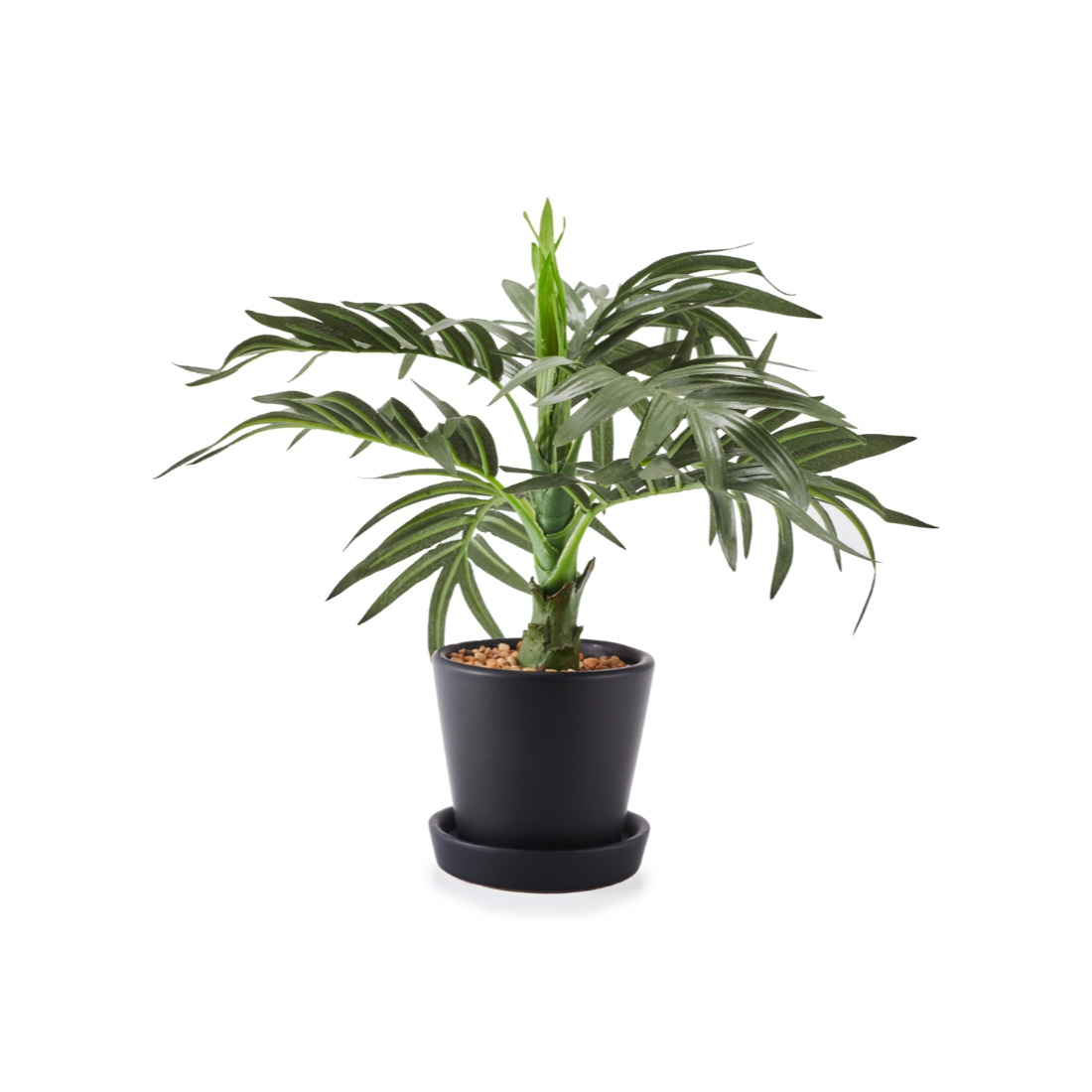 Sage Roystonea Small Wax Artificial Plants in Multicolor Colour by Living Essence