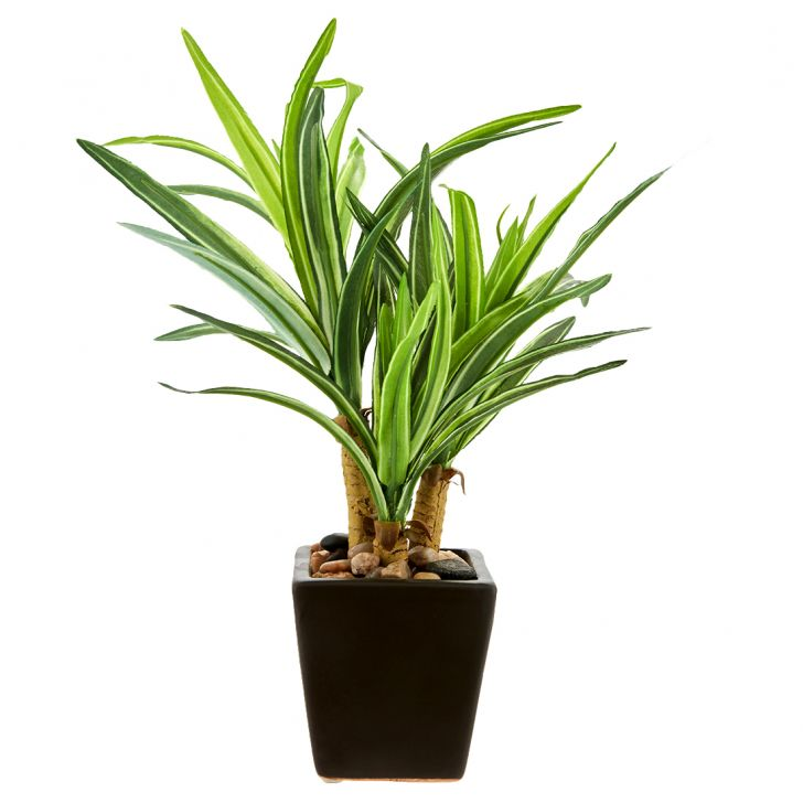 Dracena Plant In Ceramic Pot Ceramic Artificial Plants in Green Multicolor Colour by Living Essence